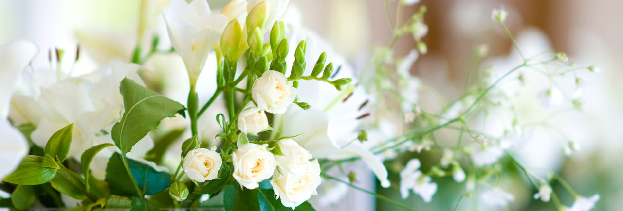 Flower Bouquet Roses Wedding Lily White Bloom Beautiful Beauty Blossom Decoration Holiday Marriage  Summer Celebration Natural Nature Posy Romance Petal Stem Floral Green Leaf Pretty Season  Seasonal Softness Arrangement Nobody Plant Set Leaves Mixed Water Bunch Closeup Day Panoramic Panorama Horizontal Banner Copy Design Cropped Background Wide Text Space Header