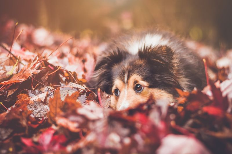 Central leaves of trees Animal Themes Animals In The Wild Autumn Close-up Day Domestic Animals Leaf Mammal Nature No People One Animal Outdoors Pets