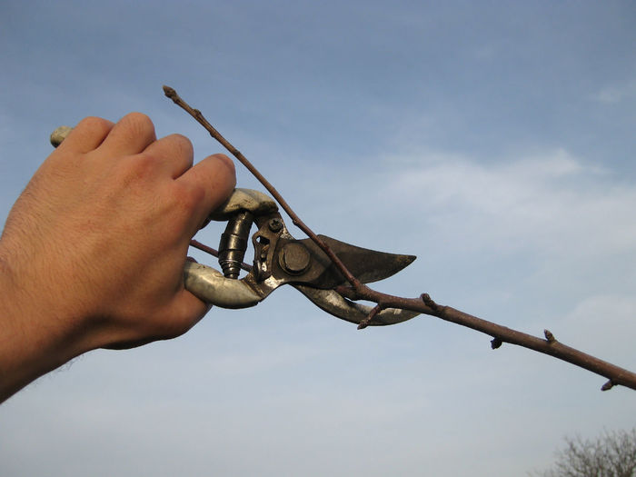 Cropped hand cutting branch with pruning shears against sky