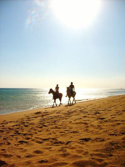 Silhouette Horse Riding On Beach