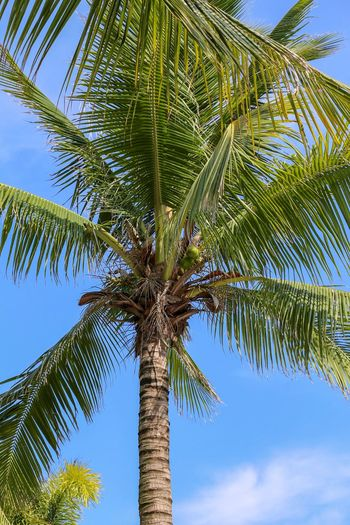 Tree Palm Tree Tropical Climate Plant Sky Low Angle View Growth