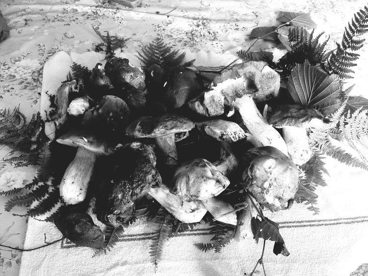 Mashrooms Mashroom Funghi Fotoavilo Eyem Italia Toirano Robertooliva Avilo Autumn Autunno