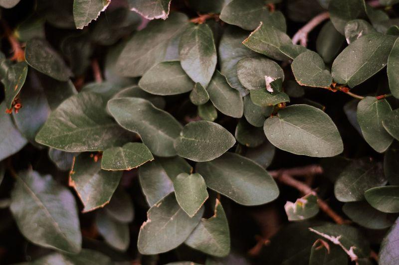 still. Leaf