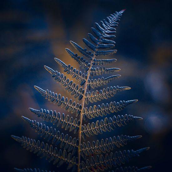 Fern leaf in the nature in autumn season
