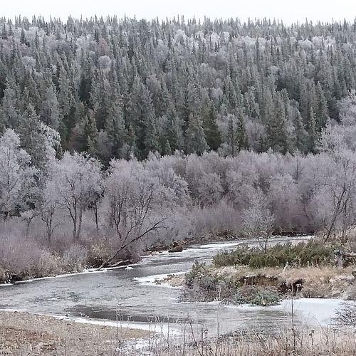 Ängevallen Frozen Nature Ljungan Beautiful Nature