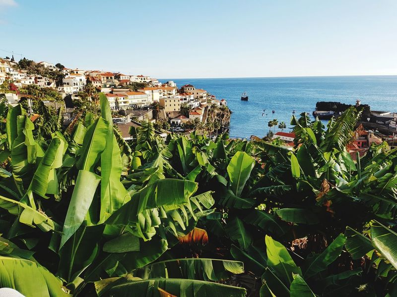 Boats Câmara De Lobos Madeira Banana Tree Photography Landscape_Collection Landscape_photography Madeira Island Trees Landscape Atlantic Ocean Vacation Time View Growth Nature Plant Sea Green Color Horizon Over Water Day Outdoors Water No People Beauty In Nature Agriculture Sky Scenics Clear Sky Flower Freshness Close-up