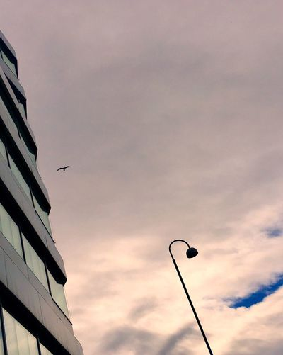 'A Hovering Seagull' Bird Animal Themes Sky Flying Low Angle View Sunset No People Cloud - Sky Outdoors Building Exterior Built Structure Architecture Spread Wings Day Urban Birds Urbex Eyeem Streetphotography Oslo 2017 KariJosefiné✨
