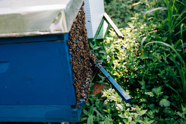 Plant Nature Growth No People Blue Green Color Outdoors Close-up Wood - Material Beauty In Nature Container High Angle View Animal Themes Agriculture APIculture Apiary Honey Bees  Bees Colony Nature Organic Healthy Eating Pollen Honey Food