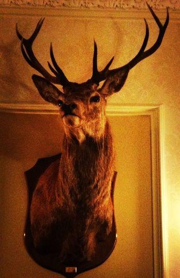 Hunting Walls Scotland Highlands
