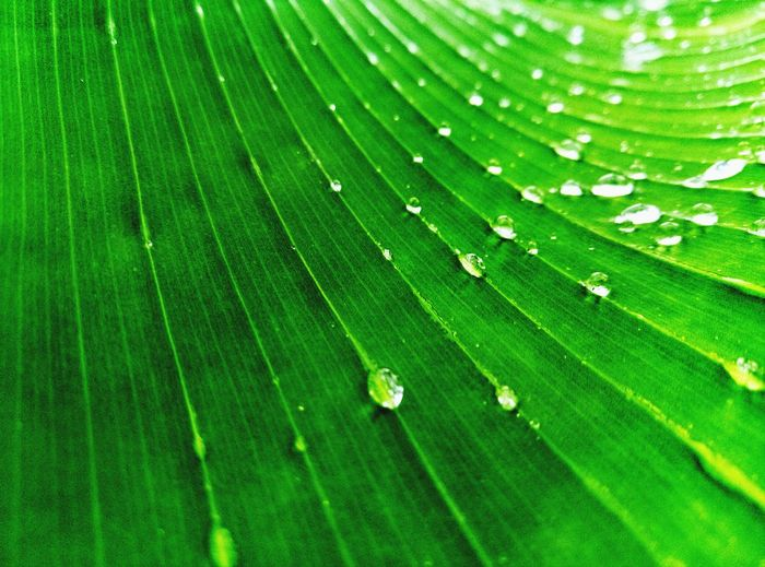 I'm Really Loving This Effects They Add Life To My Photos Well That's A Banana Leaf Folks Islandliving 🌴♥️ Green Color Leaf Nature Drop One Animal Full Frame Backgrounds Close-up Fragility Animal Themes No People Beauty In Nature Outdoors Day Animals In The Wild Animal Wildlife Water Growth Freshness EyeEmNewHere