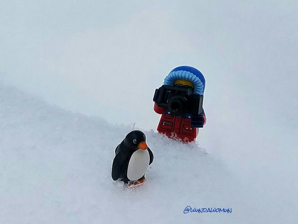 November 21-Landscape Fmsphotoaday Snow LEGO Minifigures Hispalego Winter Is Coming Winter Is Here Lego Penguin Lego Wildlife Photographer Why Can't I Be In San Diego Upstate New York North Country Nny