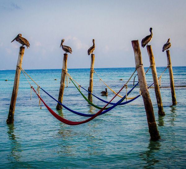 Birds Perching On Wooden Posts Over Sea