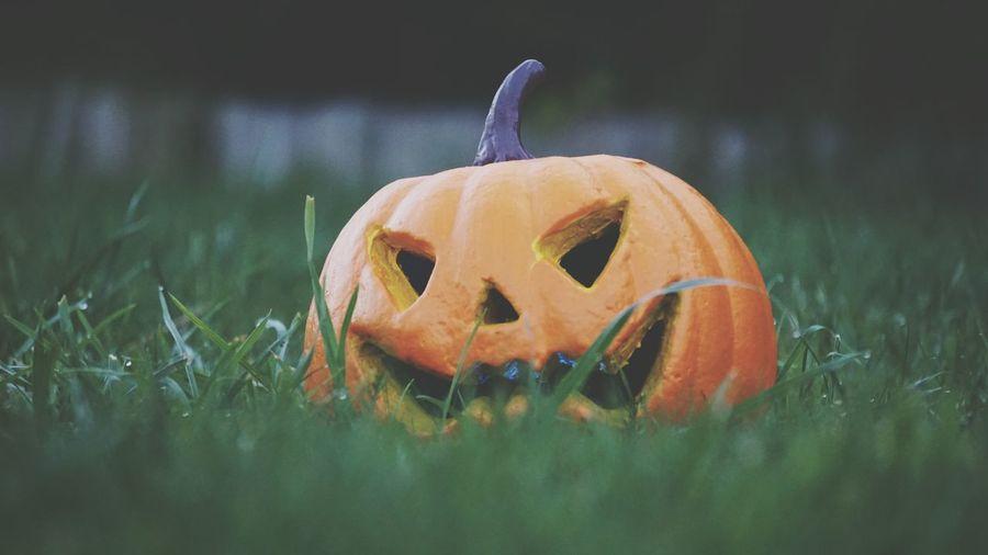 Close-Up Of Pumpkin On Grass During Halloween