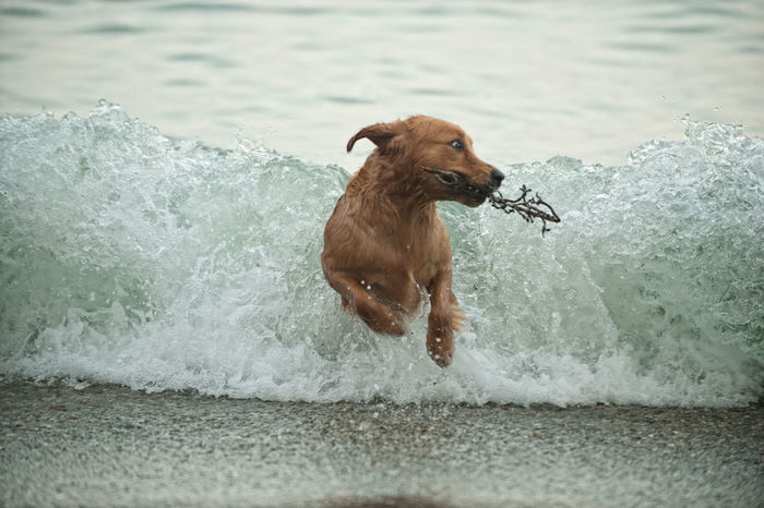 Animal Animal Themes Day Dog And Water Dog At The Beach Dog Lover Dog Lovers Dog Lovers🐾 Dog Playing Golden Retriever Goldenretriever Mammal Nature No People Photographer Arturo Macias Uceda Water Wet Dog