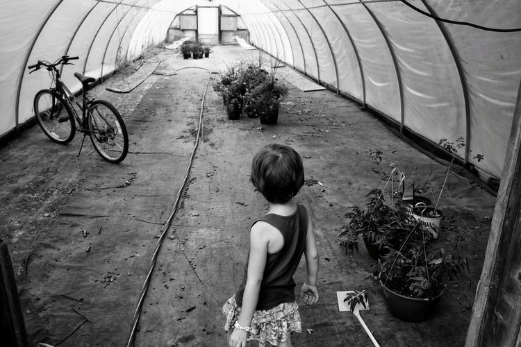 High Angle View Of Girl Standing Against Bicycle In Greenhouse