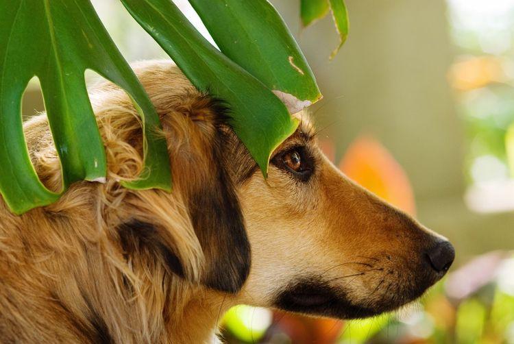 Portrait Animal