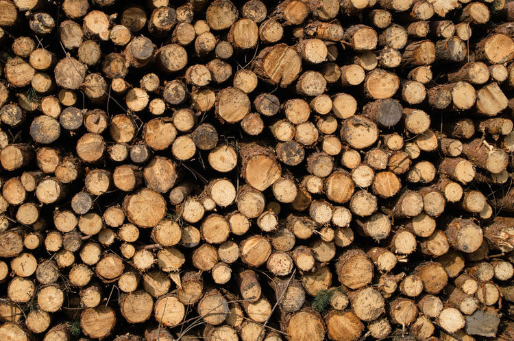 Abundance Backgrounds Close-up Day Deforestation Firewood Forestry Industry Fossil Fuel Fuel And Power Generation Full Frame Heap Industry Large Group Of Objects Log Lumber Industry No People Outdoors Pattern Repetition Stack Textured  Timber Tree Ring Wood - Material Woodpile