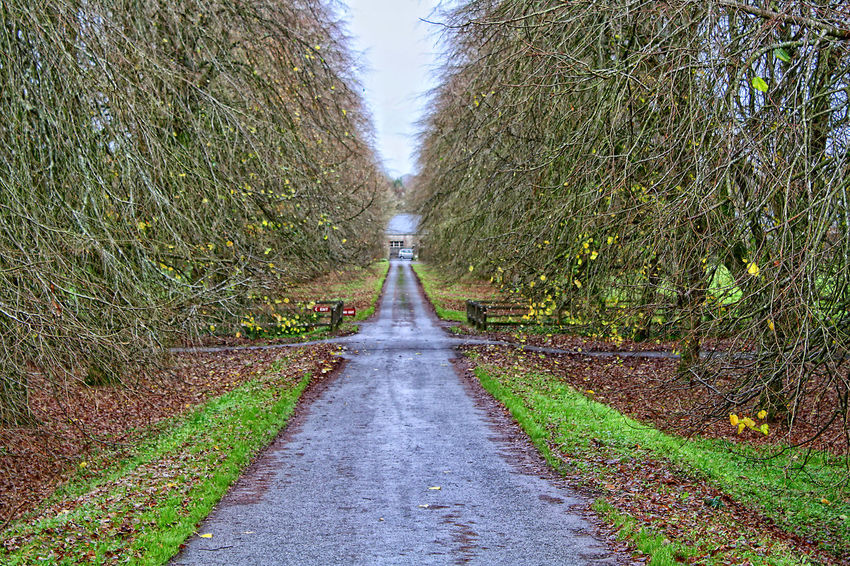 Absence Autumn Bench Blarney Castle Change Composition Day Diminishing Perspective Empty Footpath Grass Ireland🍀 Leading Narrow Outdoors Park Perspective Road The Way Forward Tree Tree Trunk Vanishing Point