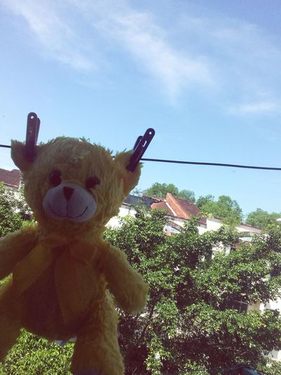 teddy 🐻