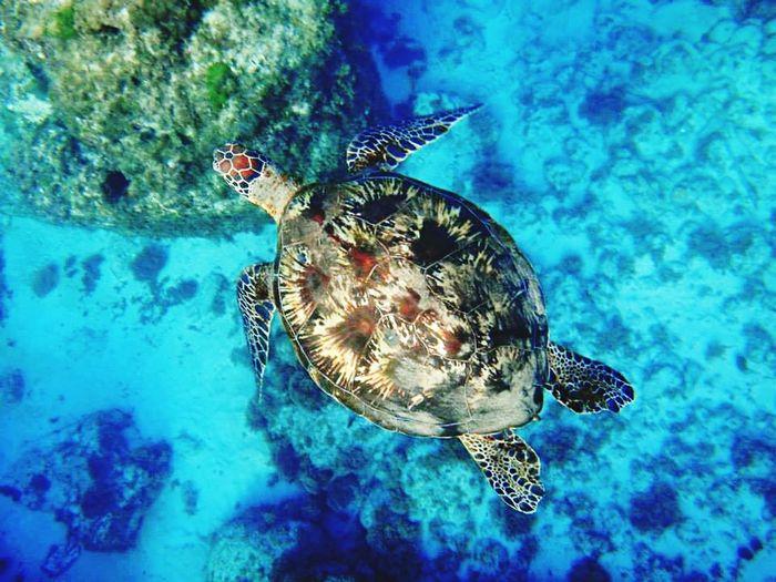 Sea Turtle FirstTime