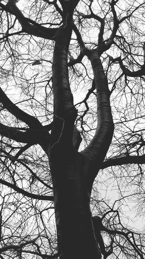 Blackandwhite Dark Darkness Black Tree Nature Gothic Winter Jezzine Lebanon