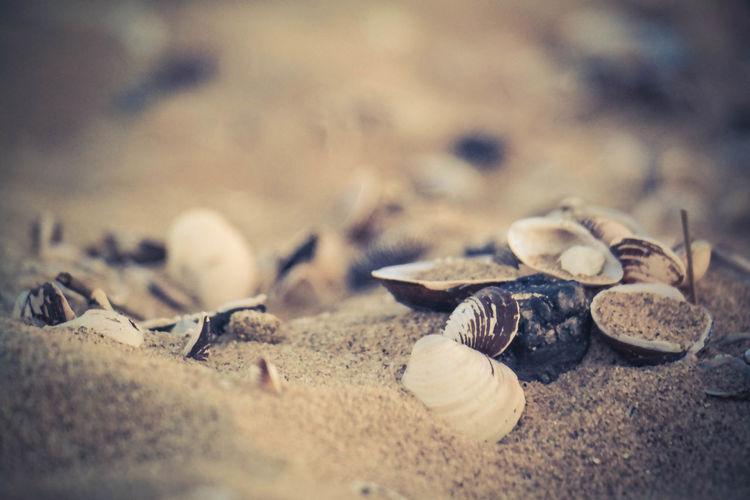 Beach Sand Beach Selective Focus Backgrounds Close-up Nature Seashell Sandy Summer Outdoors First Eyeem Photo