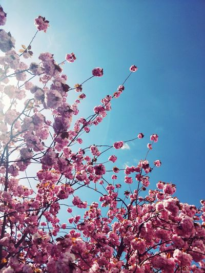 Low angle view of cherry blossom against sky