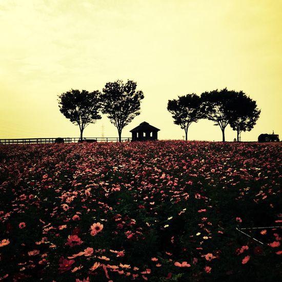 Flowers Field Romantic Lovely