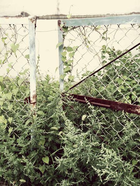 生きる 日常 Leaves Plant Nature Fence Barbed Wire Green Color Life Force