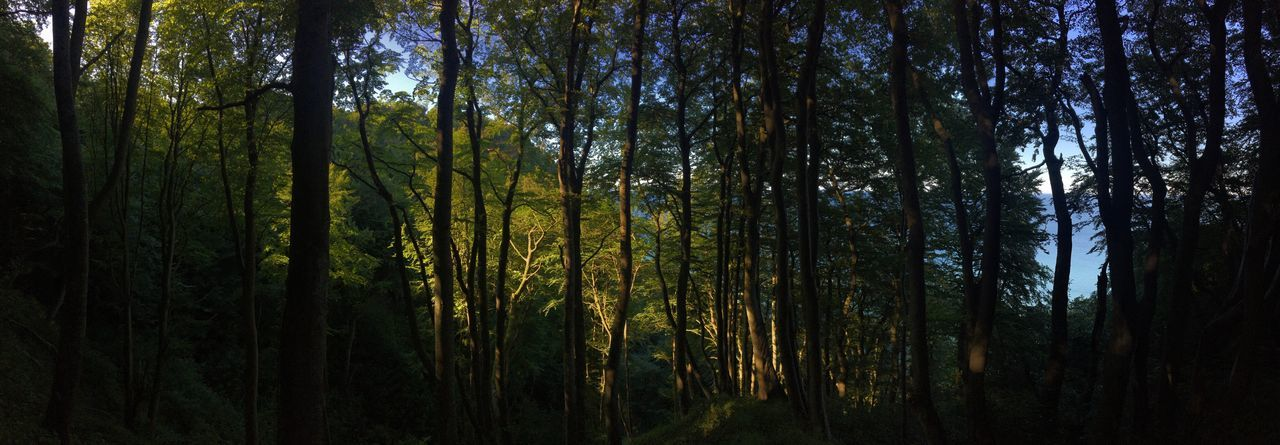 Forest at Moens Klint Tree Forest Nature Growth Tree Trunk Tranquility No People Tranquil Scene WoodLand Outdoors Beauty In Nature Seaside Moensklint Moen Danmark Beauty Place Danmark Natur Scenics Day Tree Area Panoramic Photography Panorama