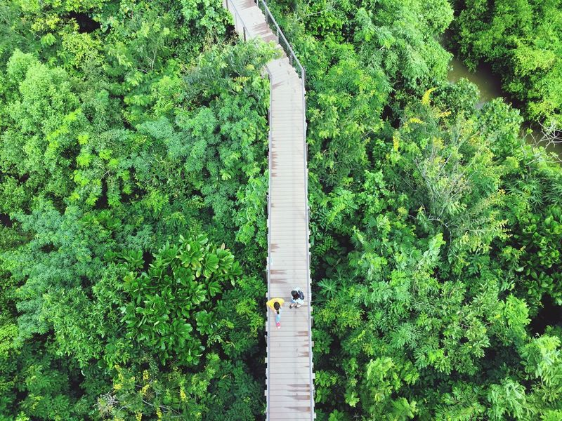Green Color Top View Birds Eye View Aerial View Aerial Shot Walk Green Tree Outdoors EyeEm Nature Lover The Week On EyeEm EyeEm Selects Forest IPhoneography IPhone