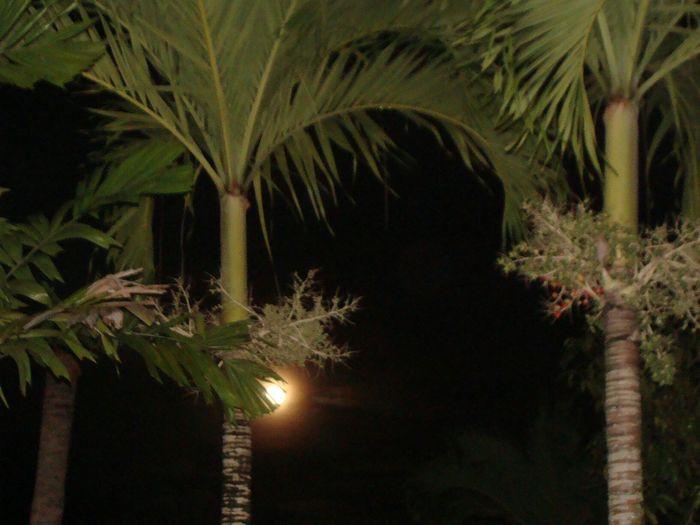 Hiding Moon Palm Trees