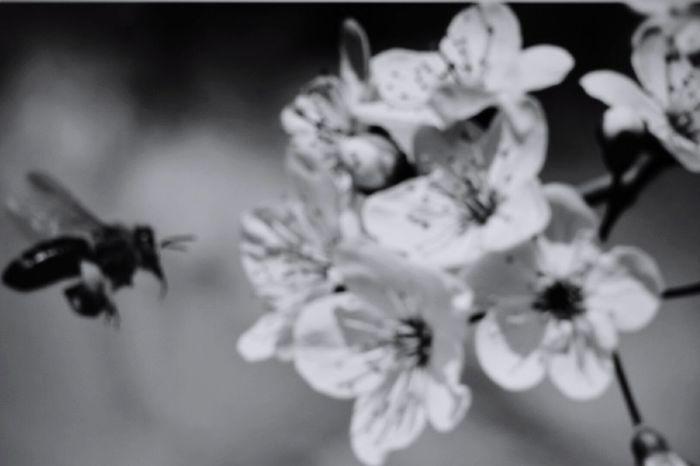 Manuka Fowler Flowers Honey Manuka Manukahoney Manukan Island Fragility Petal Flower Head Beauty In Nature Nature Close-up