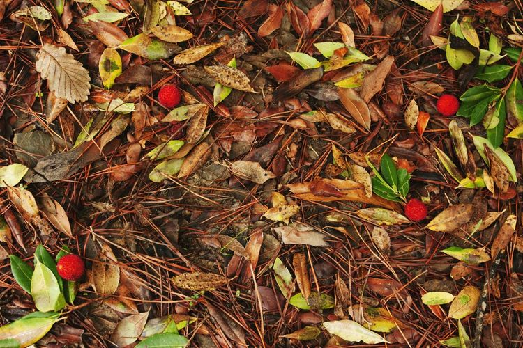 Leaf Nature Autumn Close-up Beauty In Nature Outdoors Textured  Tree Groundcover