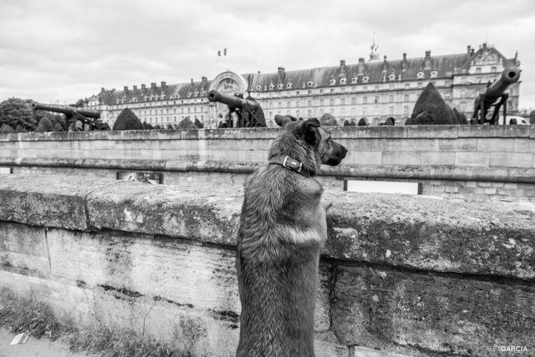 Invalides  Dogslife Dog Life Blackandwhite Photography