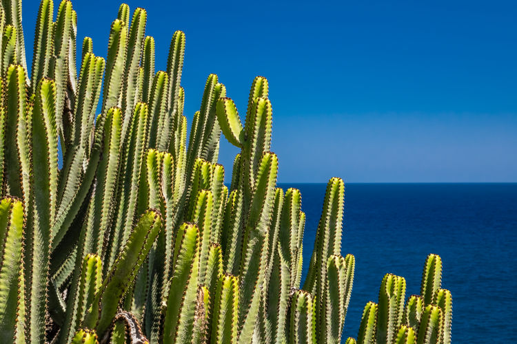 Close-up of succulent plant in sea against clear blue sky