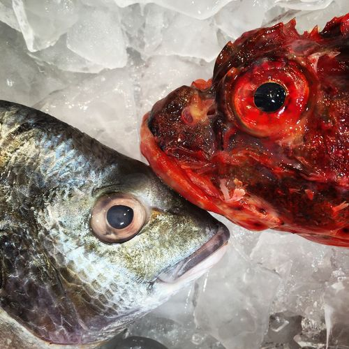 Close-Up Of Dead Fish In Amidst Ice
