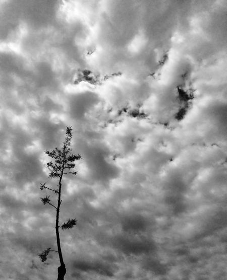 Catalunyalove L'Hospitalet De Llobregat Skay Black & White Nature Monochrome_life
