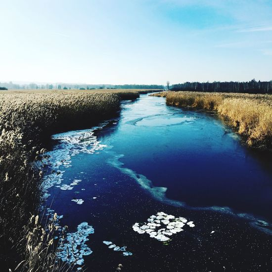 #seerosen Frozen #moor Germany #Baden-Württemberg #federsee Water Tranquil Scene Nature Scenics Beauty In Nature Tranquility Outdoors Day No People Blue Landscape