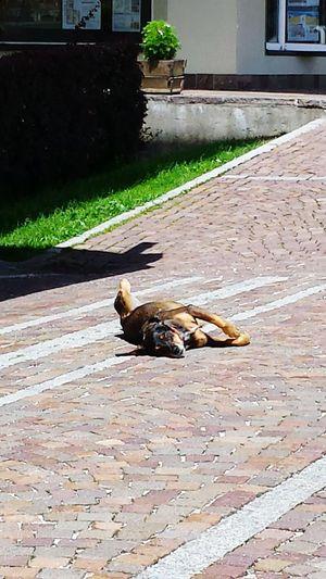Pet Photography  Taking Photos Sun_collection Summer ☀ Dog Life Sun ☀ Dog Sleeping  Dog Days Incontri Strani On The Road