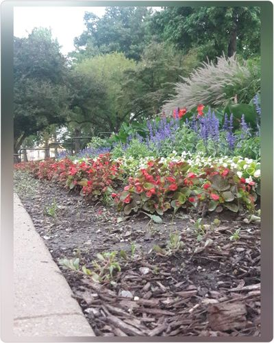 Flowers colors Plant Growth Nature Outdoors Flowerbed Beauty In Nature
