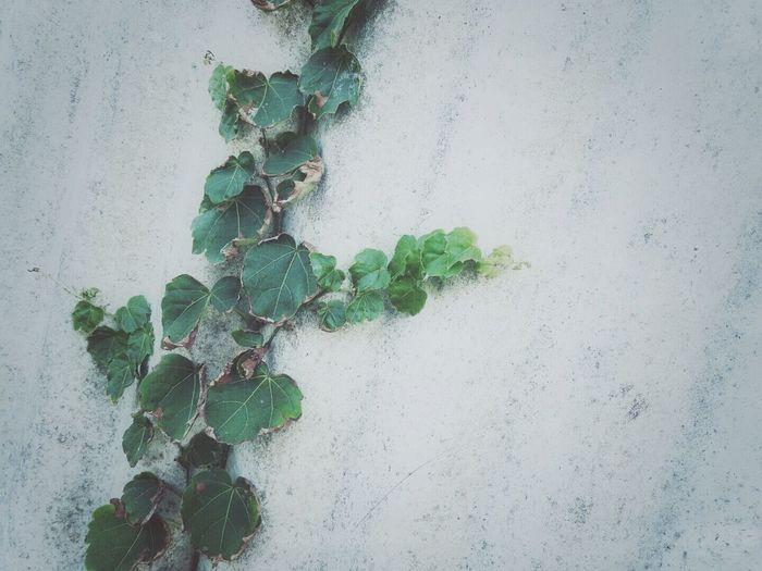 EyeEm Nature Lover 葉っぱ ( ;∀;) Green Nature