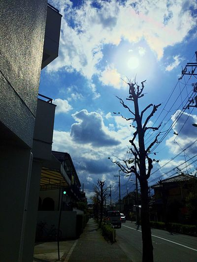 Taking Photos Fineday Cold Days Blue Sky White Wood Hello World Sun Wood Sunflower Tokyo,Japan Setagaya