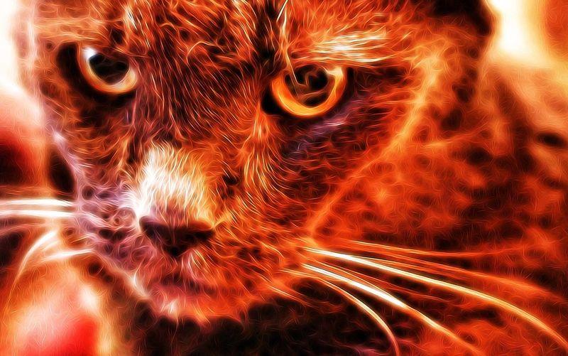Fire cat Fire