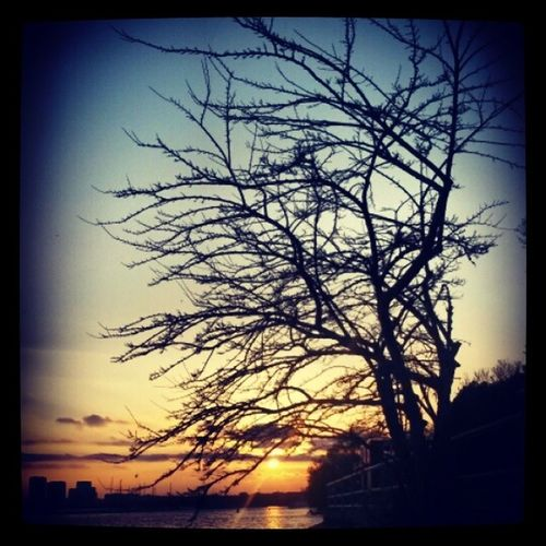 LonelyTreeButNotAlone ,Summer ,Sunset ,TorontoLife