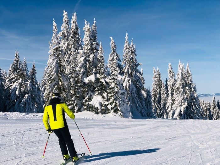Skier on the slope on a day with clear blue sky Blue Sky Pine Tree Coniferous Tree Evergreen Forest Movement Active Motion Resort Slope Skiing Skier Snow Winter Cold Temperature Winter Sport Holiday Mountain Sport One Person Vacations Leisure Activity Ski Holiday Sports Equipment Full Length Mountain Range Clothing Day Ski-wear Nature