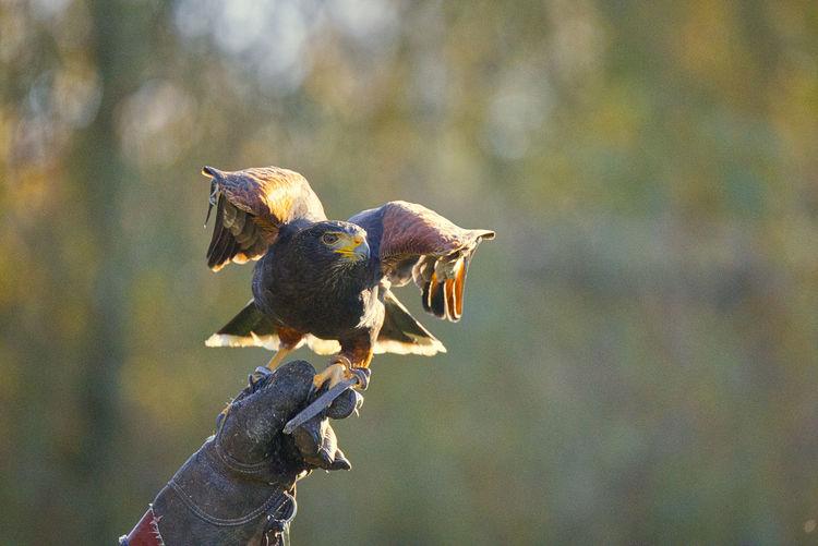Bird perching on a hand
