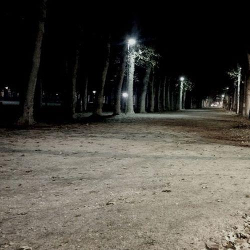 Parque  Arboles Racons Nocturnalculture