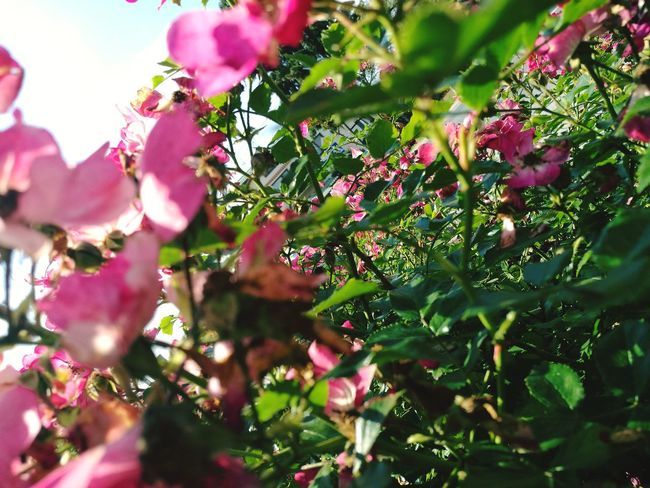 Pink Color Nature Flower Tree Beauty In Nature Day Branch No People Outdoors Growth Fragility Plant Close-up Freshness