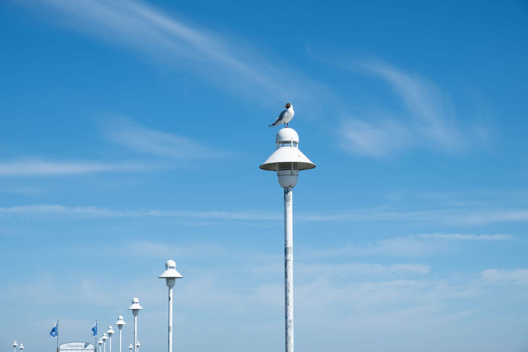 Low angle view of seagull perching on street light